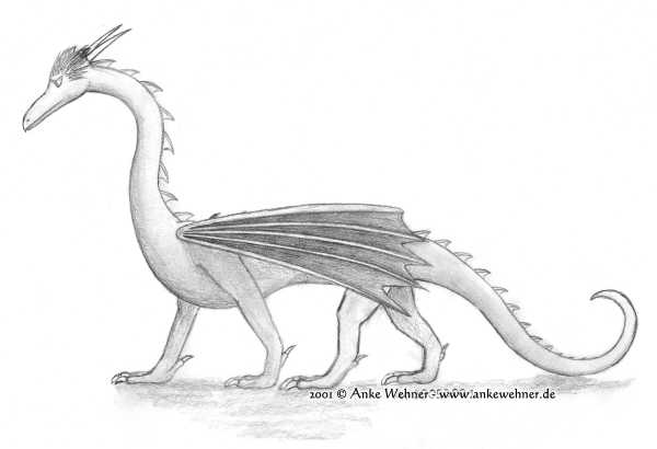 Pencil drawing of a slender western dragon, with its wings folded, walking right to left.