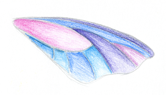 A wing that could be a narrow butterfly wing, coloured in different shades of pastel blue and pink.