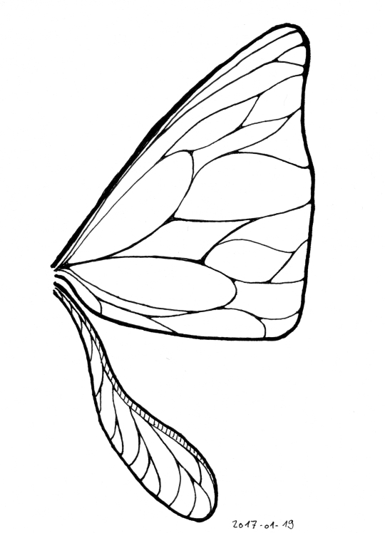 A triangular forewing somewhat reminiscent of a butterfly's and a narrow, spoon-shaped hindwing.