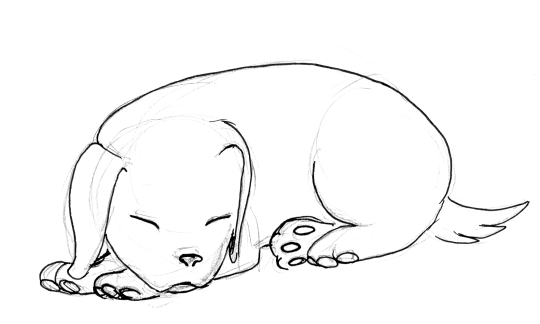 A quick line drawing of a sleeping puppy.