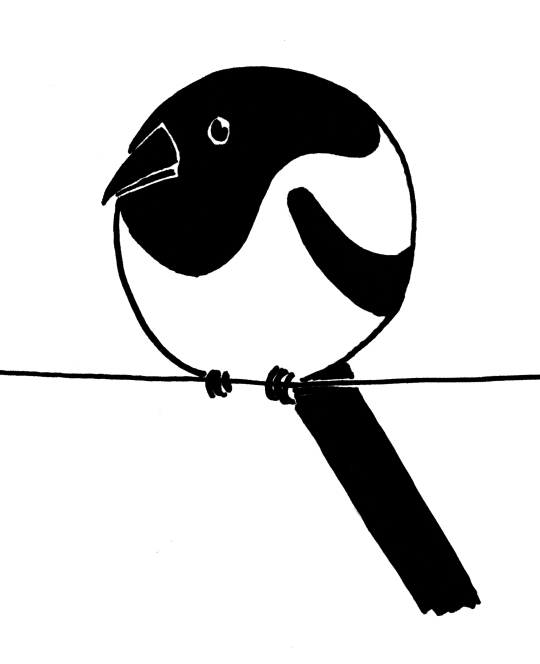 Cartoony/simplified ink drawing of a very round magpie