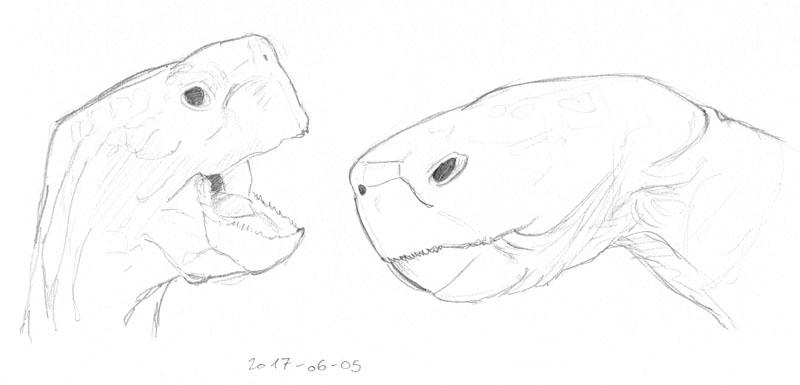 Two sketches of the faces of giant tortoises seen from the side.