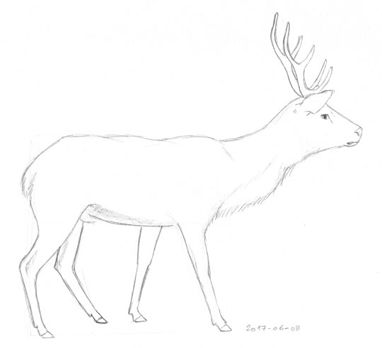 Sketch of a a red deer stag seen from the side