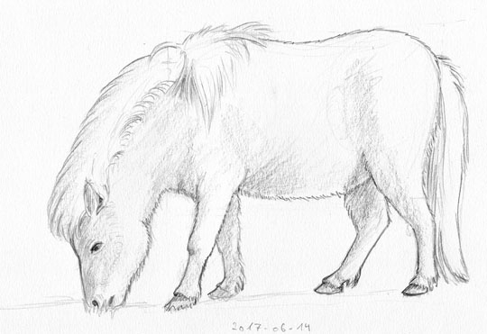 Pencil sketch of a grazing pony