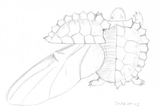 Pencil sketches of a turtle whose shell opens like a beetle's elytra