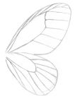 Sketch of the fore- and hindwing of the glasswing butterfly blushing phantom.
