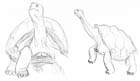 Two sketches of giant tortoises sticking out their heads.