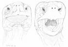 Two sketches of the faces of giant tortoises seen from the front.