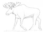 Pencil sketch of a bull moose