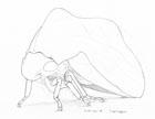 Pencil sketch of a treehopper