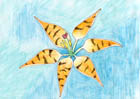 Watercolour pencil image of a tiger lily with stripes rather than spots