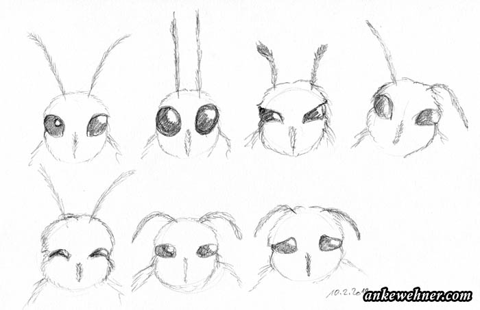 pencil sketches of cartoony human-like expressions on a moth face
