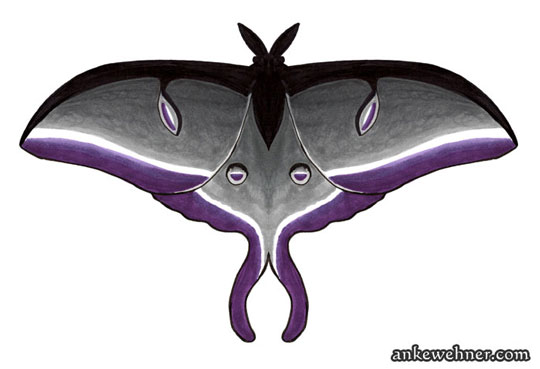 Drawing of a moth based on a luna moth, in the colours of the asexual flag (black, grey, white, and violet)